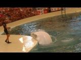 Дельфинарий, Аквапарк ТРОЯ. Белые киты.