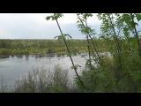 Река Ветлуга.